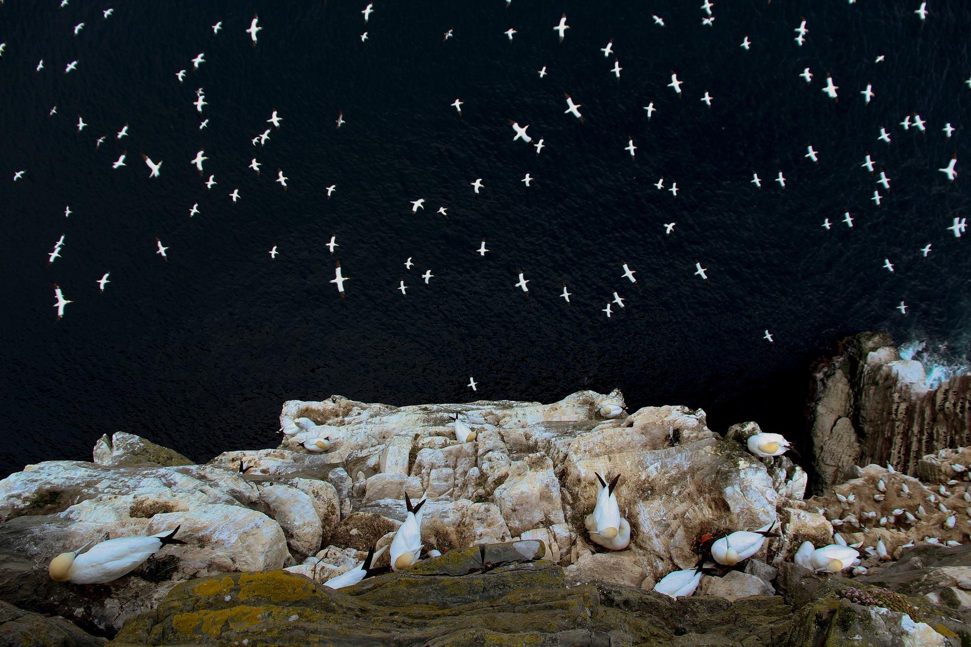 """1° colocada """"No limite"""", por Barrie Williams - Vencedor do Grande Prêmio. Fotografia realizada nas ilhas Shetland, na Escócia"""