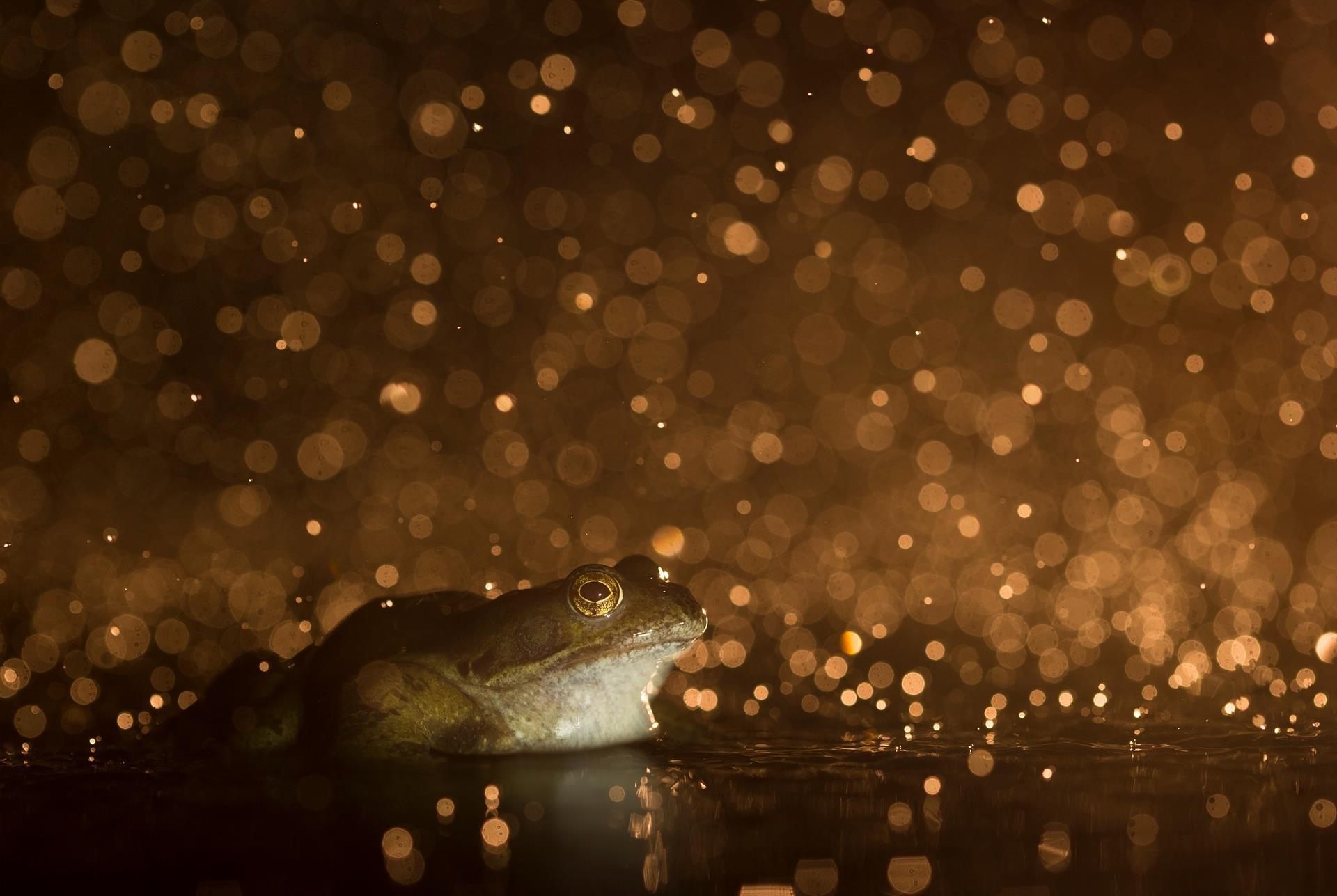 """""""Sapo"""", por Kyle Moore, 16 anos - vencedor na categoria de 12 a 18 anos. Fotografia realizada em Suffolk, Inglaterra"""