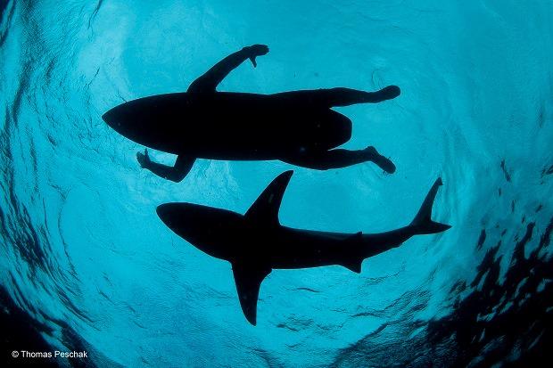 O surfista tubarão, por Thomas Peschak (África do Sul/Alemanha)