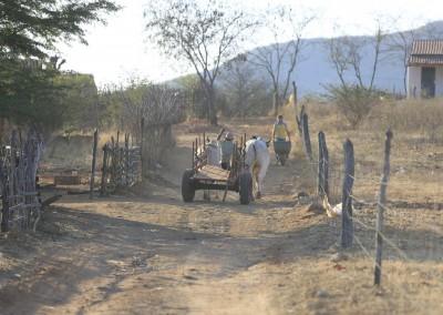 Em Calumbi, 70 porcento da população é da zona rural e a ocupação prioritária é de agricultores