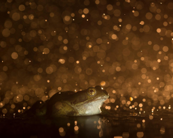 Imagens fantásticas de uma natureza desbravada em concurso de fotografia britânico