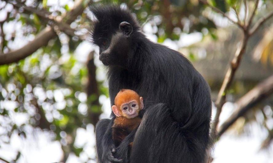 Taronga Zoo/Divulgação