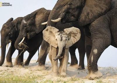 """""""Um disfarce de Areia"""" (Botswana), por Eric Kneler"""