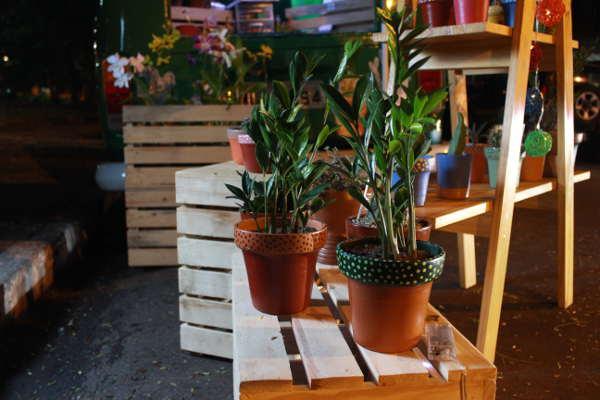 Plantas de diversos tamanhos para todos os  gostos