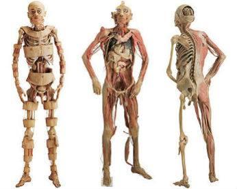 "10 ""mistérios"" do corpo explicados por cientistas"