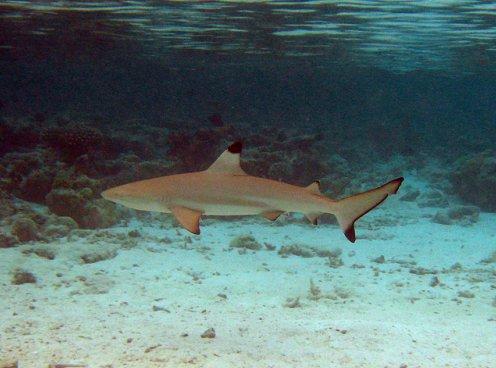 Tubarão é visto nadando em piscina de condomínio