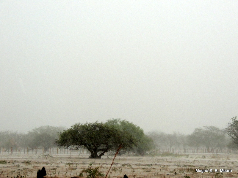 Chuvas em Petrolina. Registro de Magna S. B. Moura/Reprodução