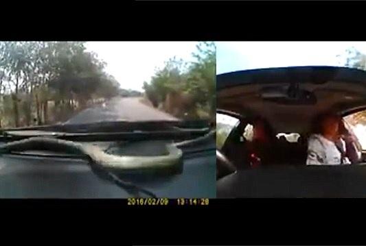 """Cobra sobe em painel de carro em movimento e """"toma lugar"""" de passageiros"""