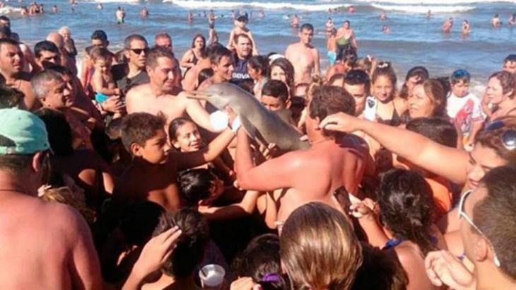 Por selfies, banhistas tiram bebê golfinho da água, que acaba morrendo