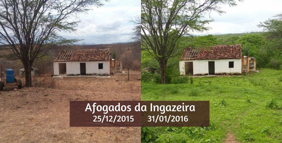 Chuvas mudam cena do Sertão, mas estiagem em 2016 deve ser ainda mais dura