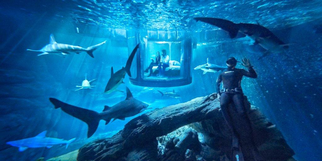 Airbnb oferece hospedagem em quarto rodeado de tubarões