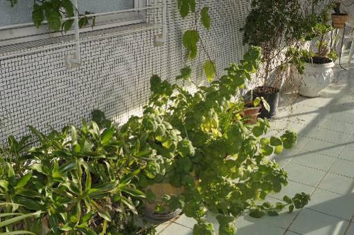 Aplicativo ajuda a criar horta caseira