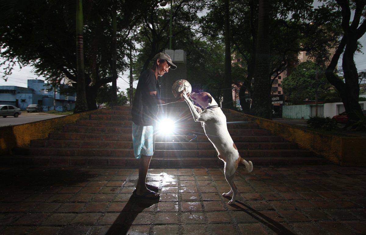 Pessoas sem teto fazem de cachorros suas famílias