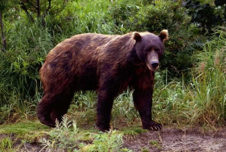 Menino de 7 anos some após ser colocado de castigo em ilha, reduto de ursos