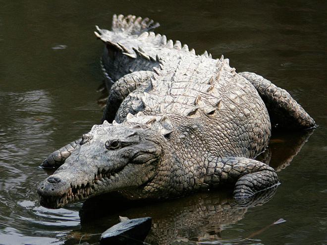Mulher é atacada por crocodilo em praia na Austrália
