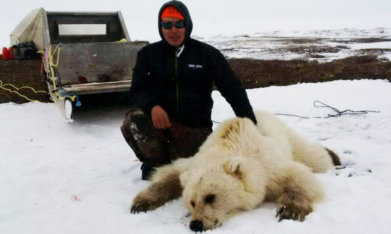 Raro urso híbrido é abatido por caçador, no Canadá