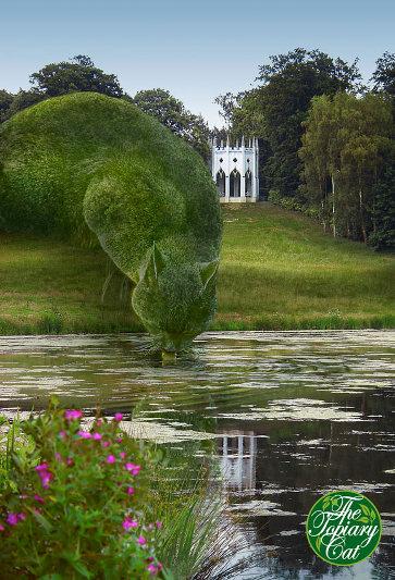 gato gigante arbusto lago