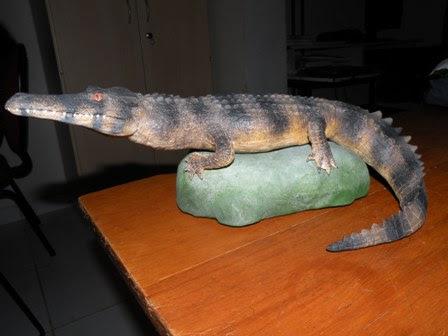 Pesquisadora da UFPE identifica fóssil mais antigo de crocodilo anão já encontrado