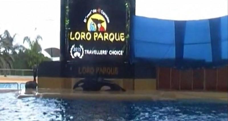 Orca tenta se matar em parque dos Estados Unidos