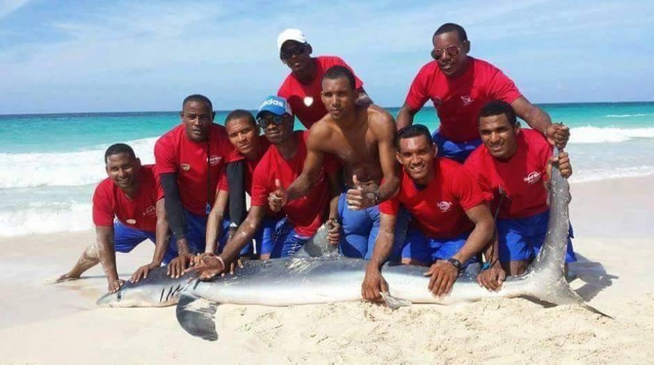 Tubarão morre após ser retirado do mar para foto