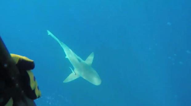 Mergulhador é cercado por tubarões e registra em vídeo