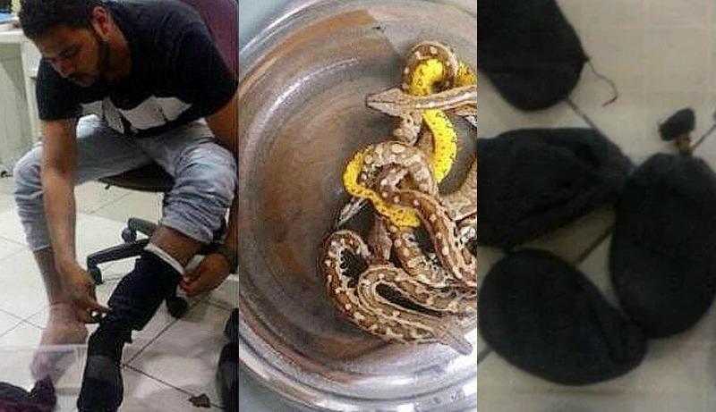 Homem é detido ao tentar levar 10 cobras dentro da calça em avião