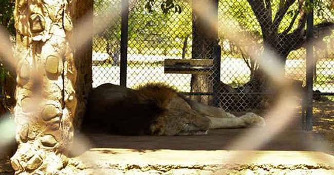 Animais são abandonados em zoo da Venezuela e 50 morrem de fome