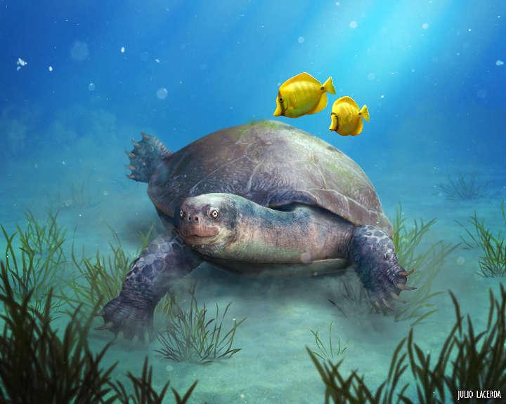 Identificada tartaruga pernambucana da pré-história