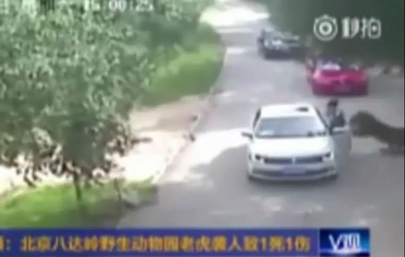 CCTV Badaling Wildlife Park/Reprodução
