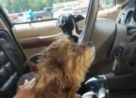 """Cachorro """"dirige"""" carro e gera acidente nos EUA"""
