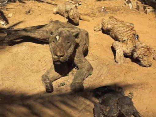 """Pior zoo do mundo"" fecha as portas na Faixa de Gaza"