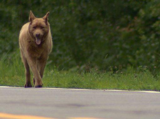 A história de Bruno, o cão que virou o xodó de uma cidade
