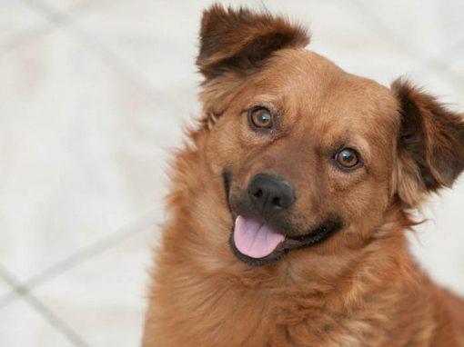 Cães gostam mais de elogio do que comida, revela estudo