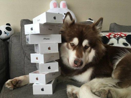 Cadela ganha oito iPhones 7 do filho do homem mais rico da China