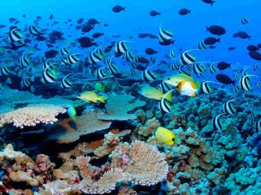 Canto de peixes do oceano é gravado em experimento científico