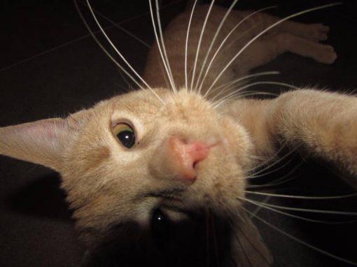 Aplicativo permite que animais façam selfies