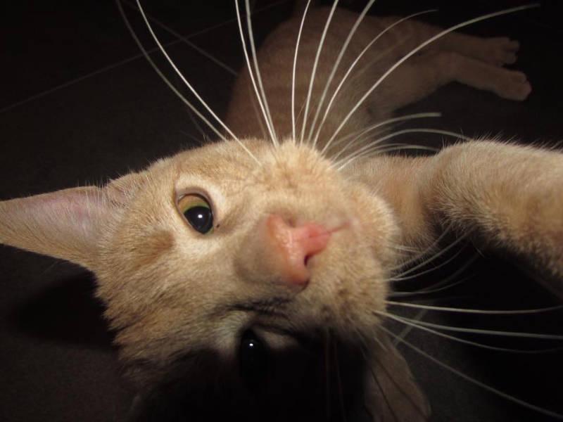 Cat Snaps / Facebook