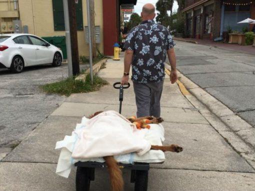 Homem improvisa para levar cão depressivo, que não pode andar, para passear