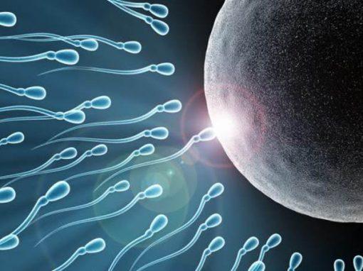 Polícia investiga doador de espermatozoides que pode ter mais de 100 filhos