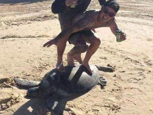 """Homens """"surfam"""" em tartaruga marinha e posam para foto"""