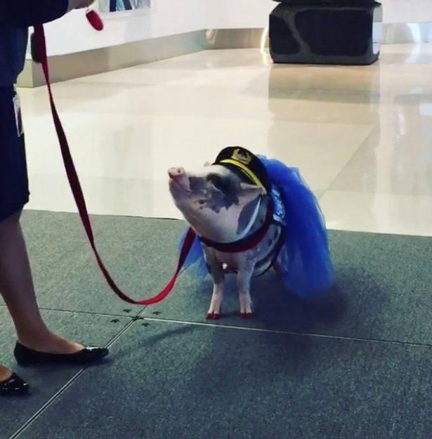 aeroporto-porca-acalmar2