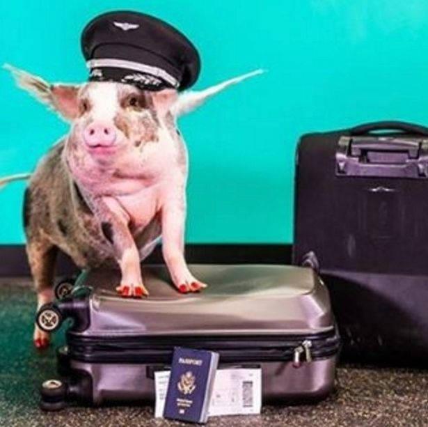 aeroporto-porca-acalmar5