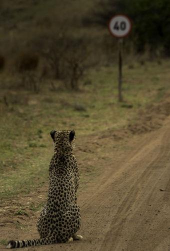 fotografias-animais-selvagens14