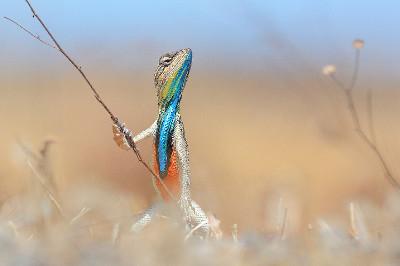 fotografias-animais-selvagens15