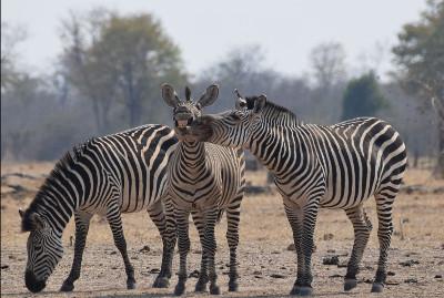 fotografias-animais-selvagens4