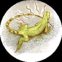 iguana-ilustracao-greg