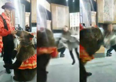 Urso ataca apresentadora em programa na Rússia