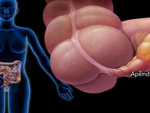 Função do apêndice é finalmente descoberta por estudo dos EUA