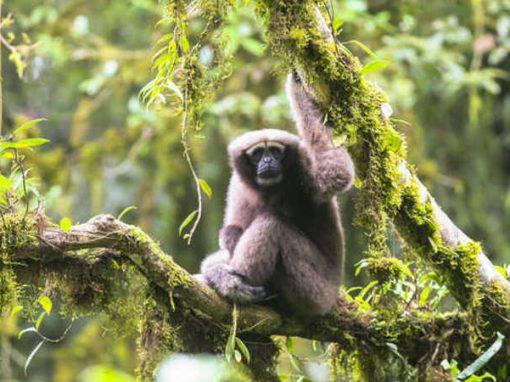 Nova espécie de macaco tem nome em homenagem a Star Wars