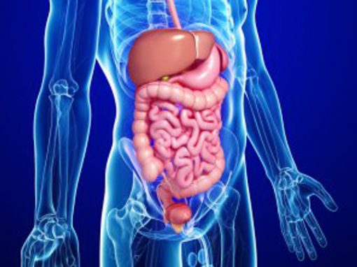 Pesquisador descobre novo órgão do corpo humano